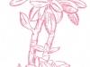 Crassula portilacea wild
